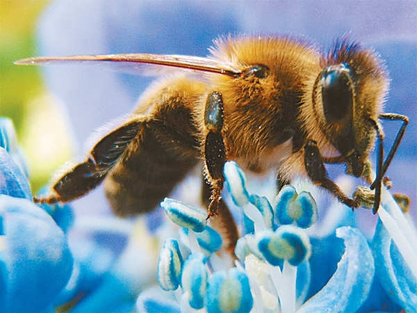 Nanopartículas cargadas con veneno de abeja matan al VIH