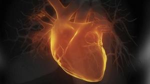 Rejuvenecer el corazón ahora es una realidad