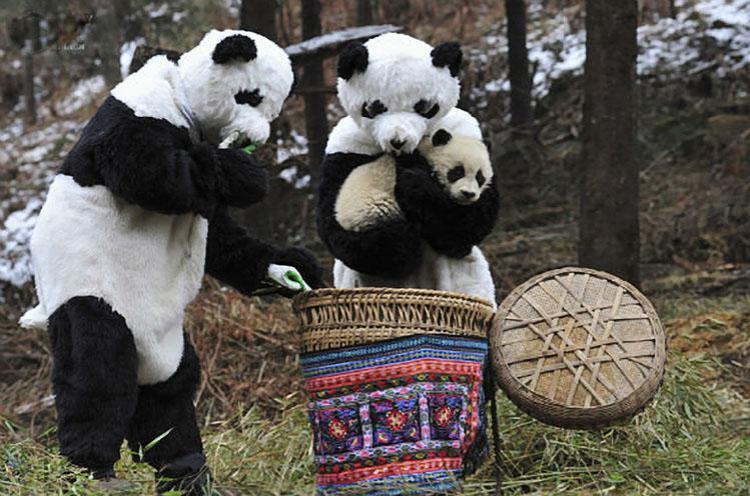 cuidado de pandas
